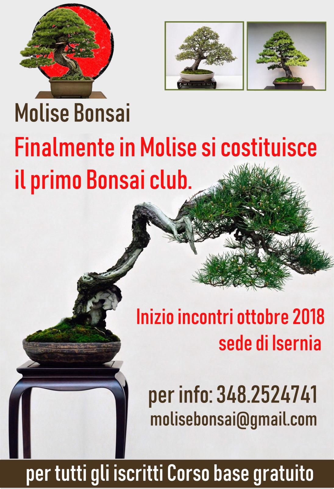 Creazione Club Amante Del Bonsai Club Alpino Italiano Sezione